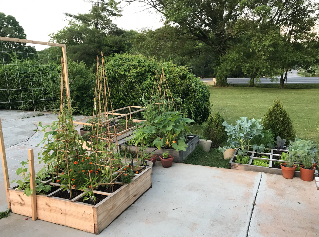 square foot garden beds with various vegetables growing