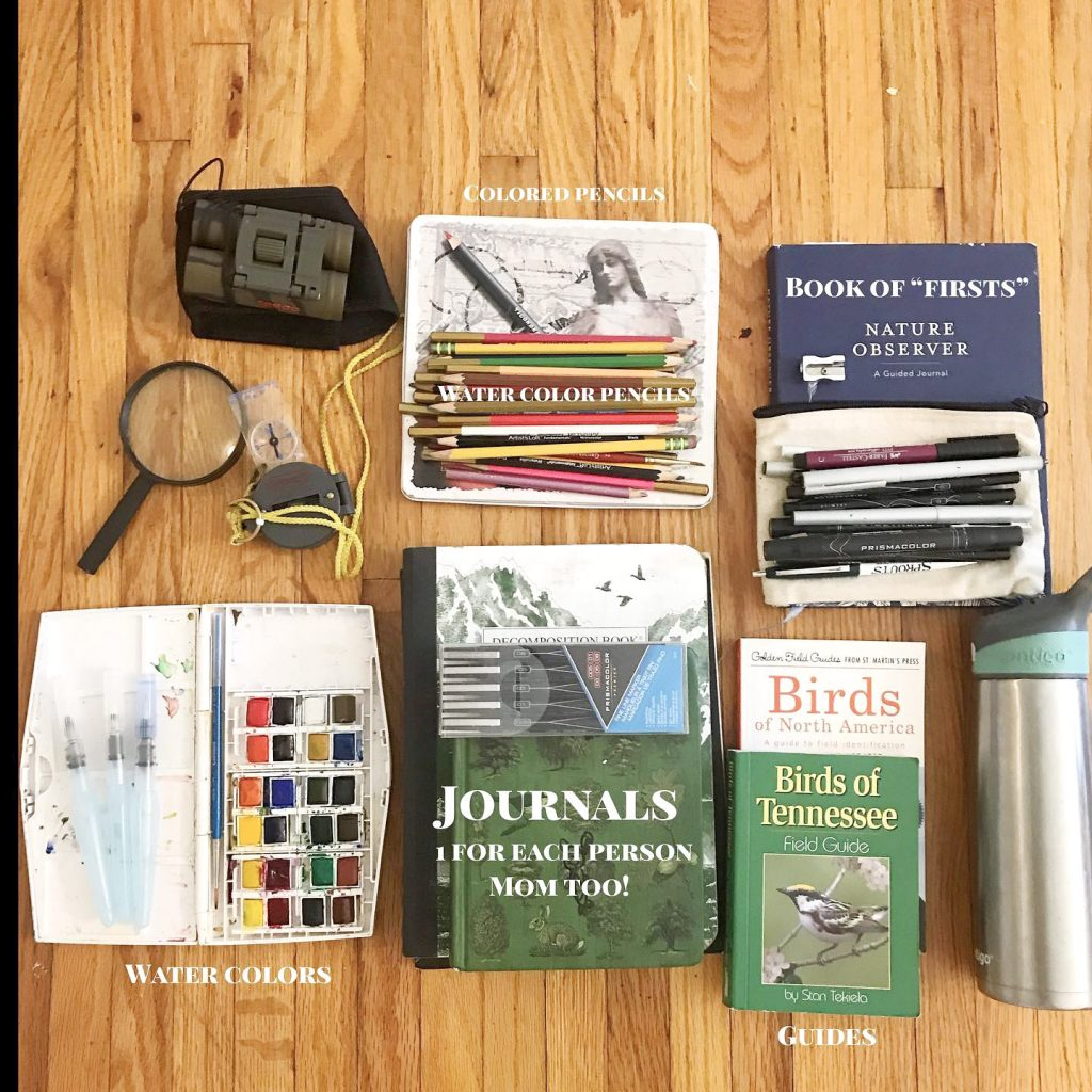 nature study materials laid out on wood